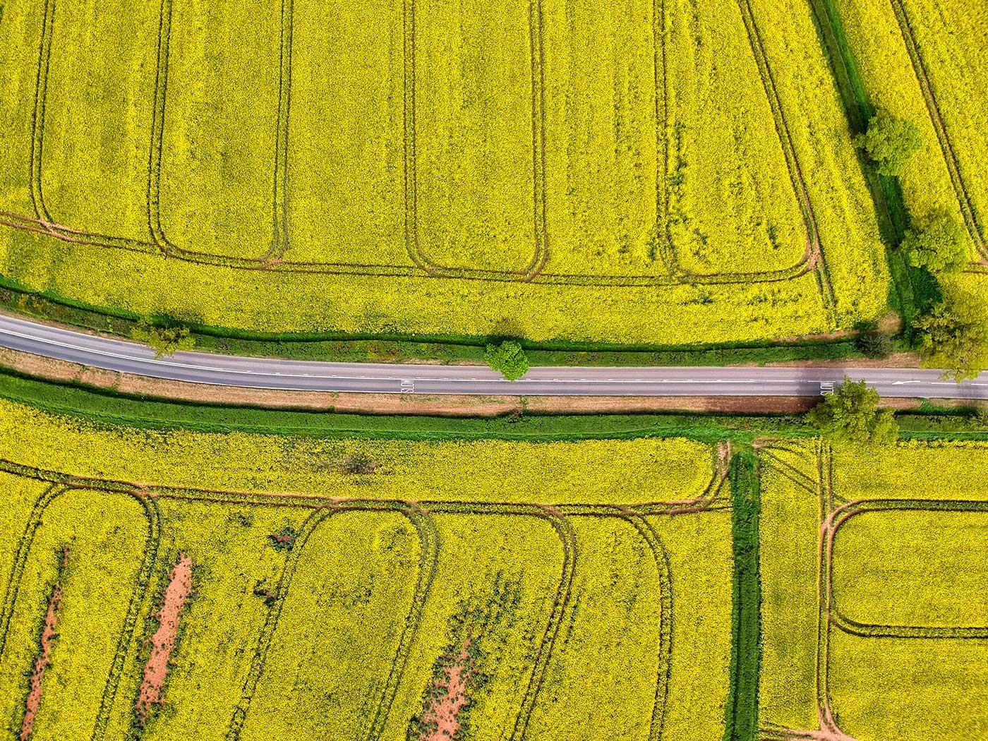 Red Zeppelin - Yellow Split Road Gallery Image 4