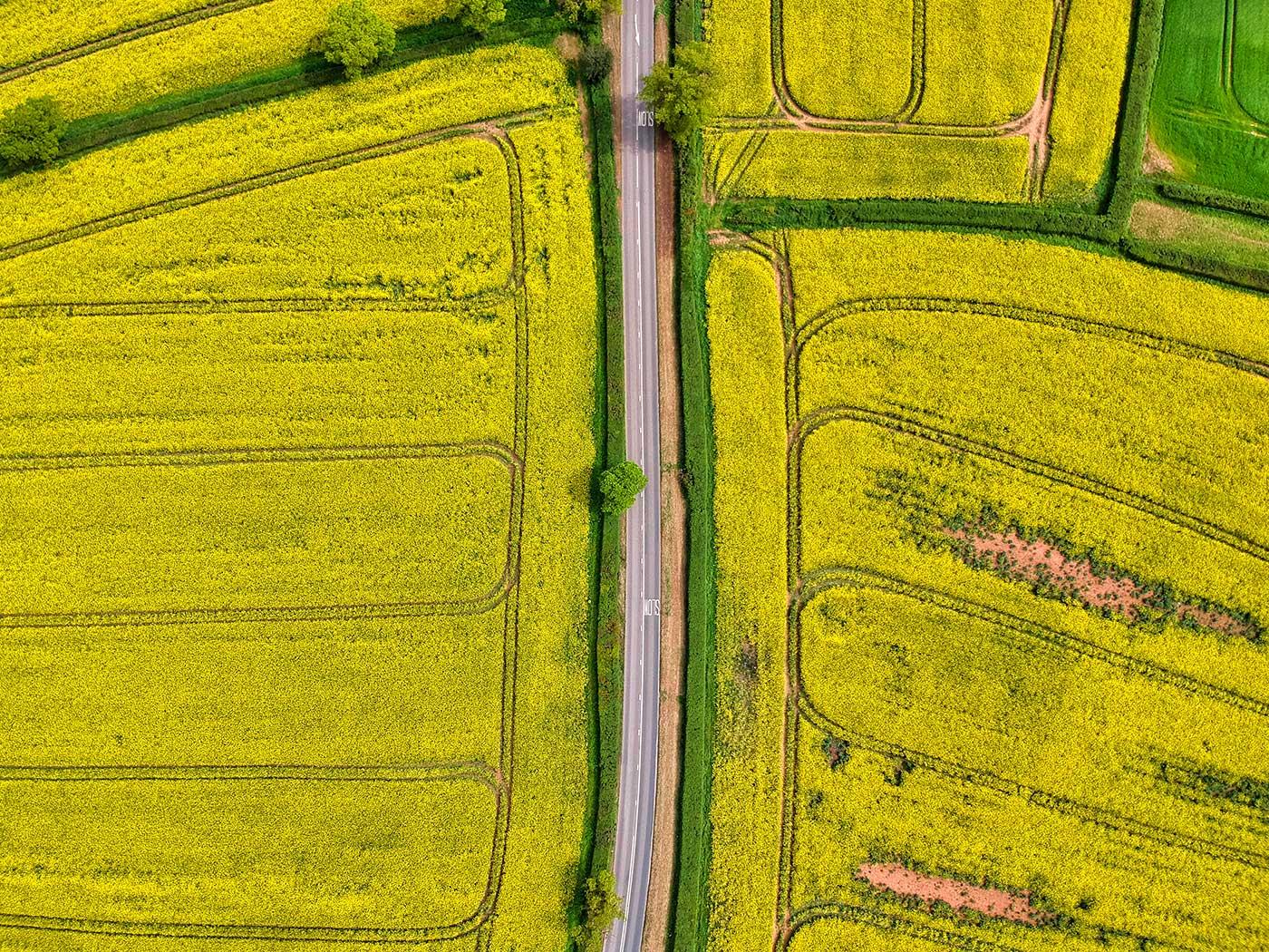 Red Zeppelin - Yellow Split Road Gallery Image 3