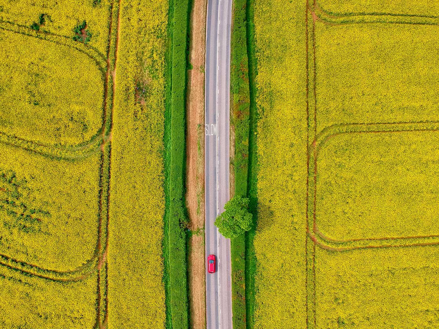 Red Zeppelin - Yellow Split Road Gallery Image 2